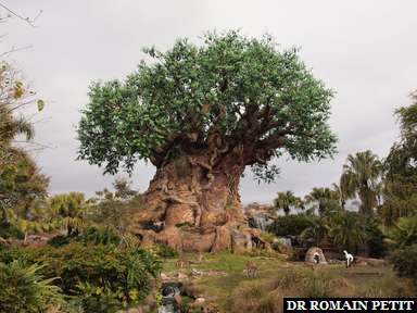 Première visite à Disney's Animal Kingdom (Orlando, Floride, USA)
