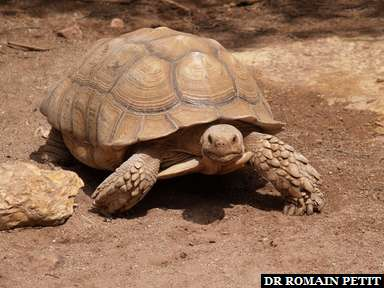 Album photos Village des Tortues - Gonfaron par Romain Petit