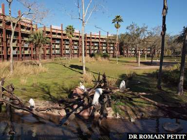 Album photos Disney's Animal Kingdom Lodge par Romain Petit